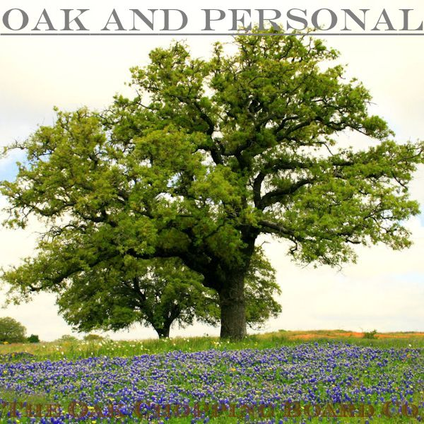English pedunculate oak tree